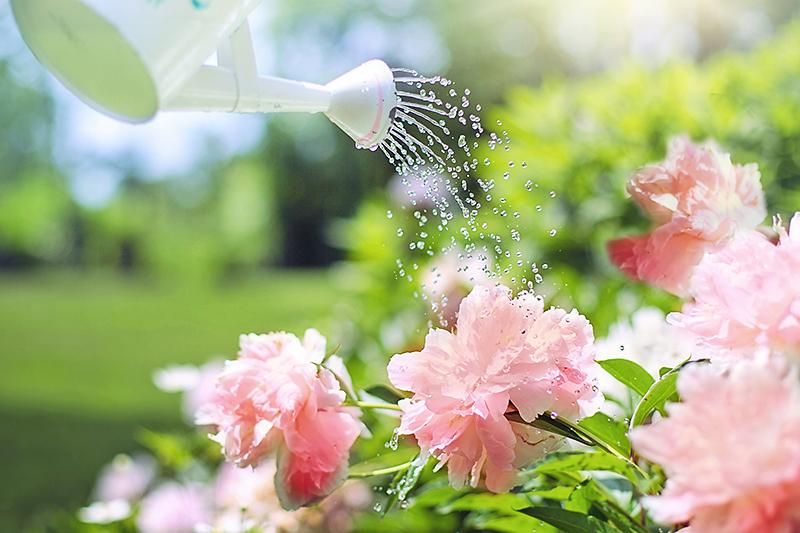 sodo įkvėpimo gėlės sode
